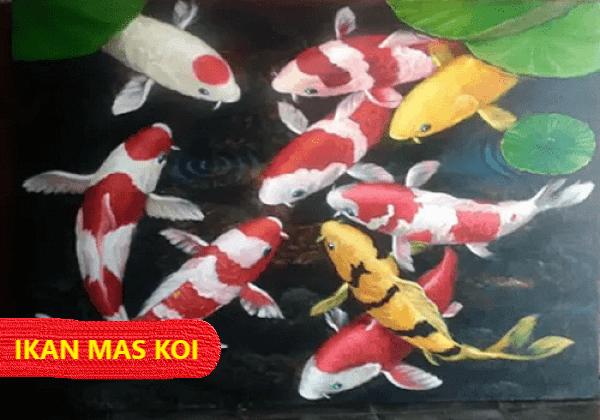 Ikan Mas Koi